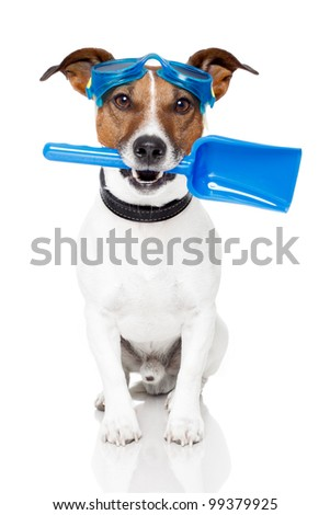 dog with goggles and a shovel