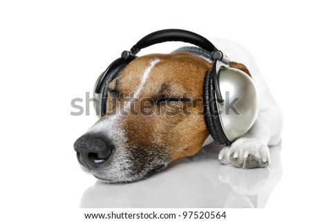 dog with headphones listening to music