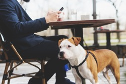 Dog with its owner at a coffee shop.