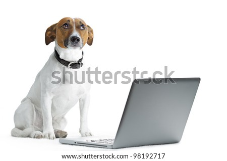 dog with laptop and thinking