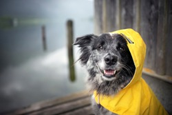 Dog with rain coat at the lake. Dog in the rain.