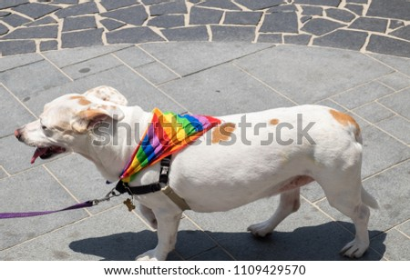 Dog with rainbow flag collar at annual gay pride parade & festival in Tel-Aviv