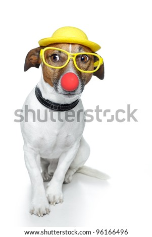 dog with red nose and yellow hat