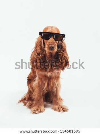 dog with retro sunglasses