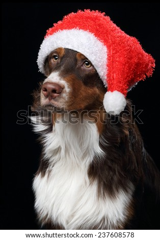Dog with Santa's hat #237608578
