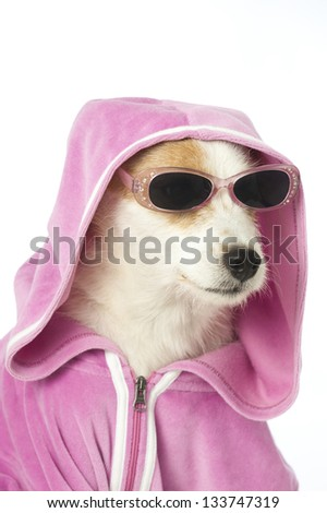 Dog with shirt - stock photo