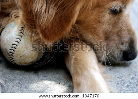 Dog with softball