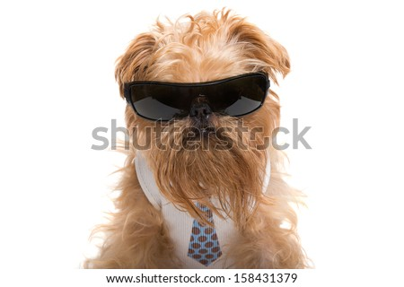 Dog with sunglasses and a tie, isolated on white background