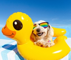 dog with sunglasses and floating ring