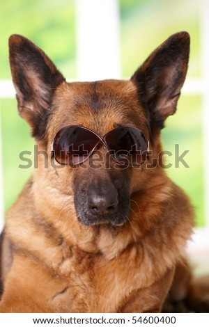 Dog with sunglasses laying in home