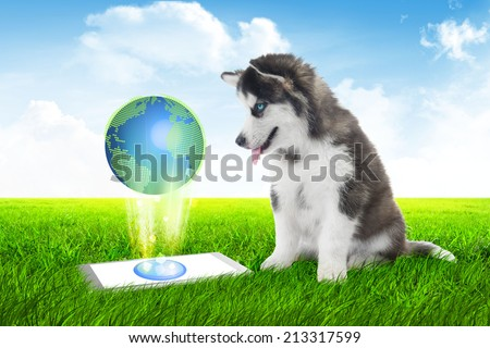 dog with Tablet discover the earth,business dog with Tablet sitting on grass