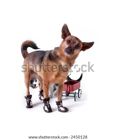 Dog with Wagon and Cat - stock photo