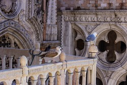 Doge's Palace in Venice, details of the decorations and birds sitting on the terrace. The Doge's Palace is one of the symbols of the city of Venice. Beautiful sculptural details, seagulls and pigeons.