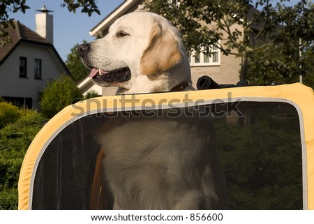 doggy in car