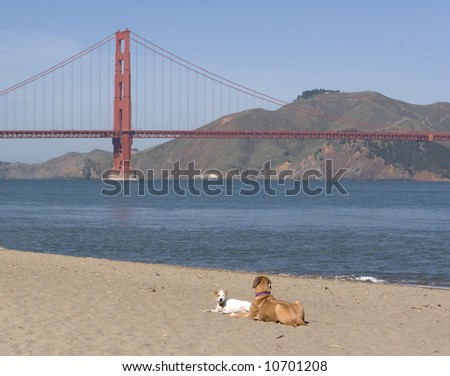 Dogs - stock photo