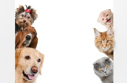 Dogs and Cats.