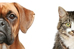 Dogs and cats. half of muzzle close up portrait on a white background