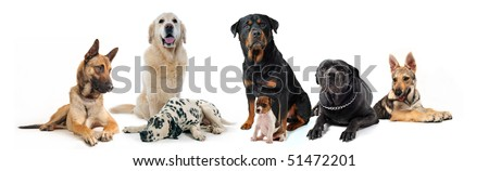 dogs and puppies sitting and lying down on a white background