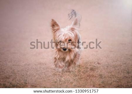 dogs animal  pasztel Stock fotó ©