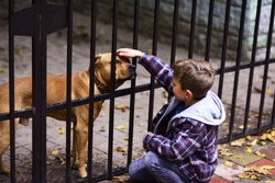 Dogs are helpful. Small boy plays with dog in dogs shelter. Small boy patting dog on head. A dog in need needs more than shelter.