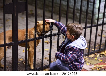 Dogs are helpful. Small boy plays with dog in dogs shelter. Small boy patting dog on head. A dog in need needs more than shelter. - Shutterstock ID 1201260931
