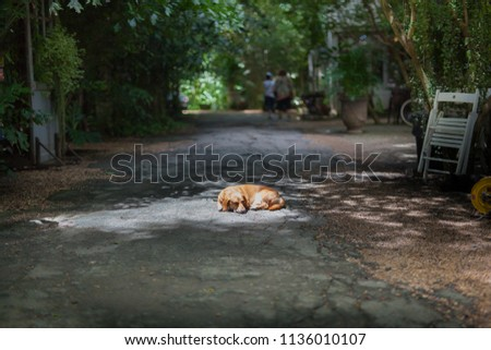 Dogs are sunbathing #1136010107