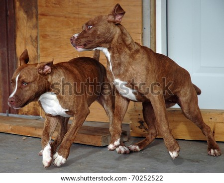 Dogs at Play - stock photo
