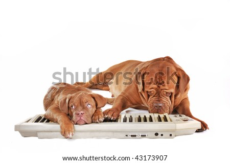Dogs Band Playing Techno Music on Synthesizer Keyboard