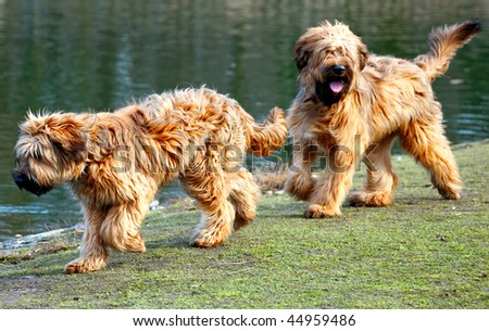 Dogs chasing each other - stock photo