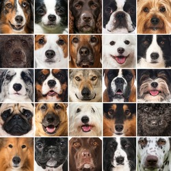 Dogs collage