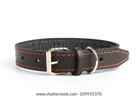 dogs collar on white