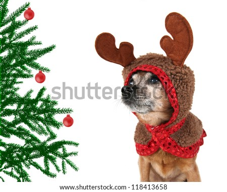 dogs dressed up in reindeer antlers