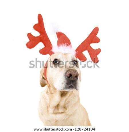 dogs dressed up in reindeer antlers