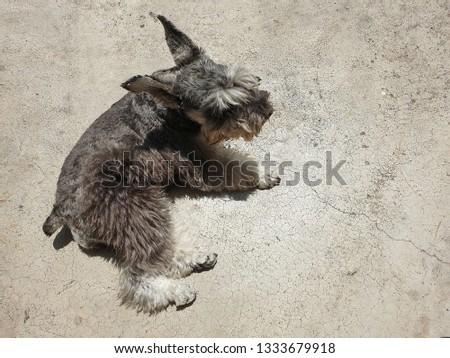 Dogs happily sunbathe on the cement floor. #1333679918