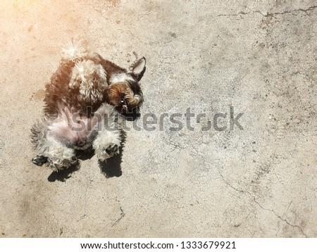 Dogs happily sunbathe on the cement floor. #1333679921
