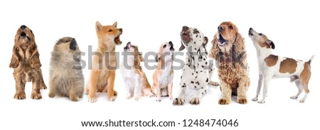 dogs howling in front of white background #1248474046