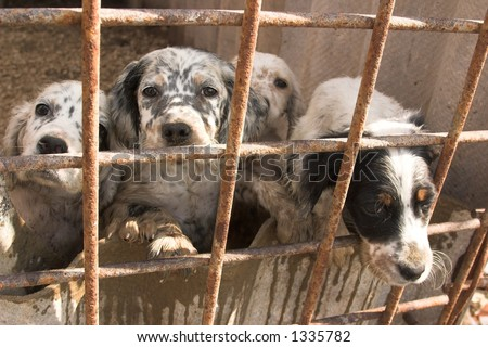 dogs in captivity