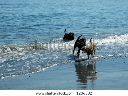 dogs in the surf
