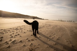 dogs on the beach in winter in thenetherlands