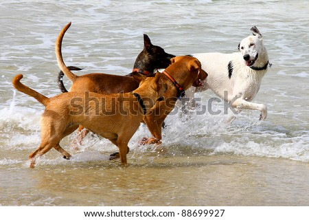 dogs playing and splashing in water at the beach