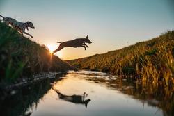 Dogs playing around beautifull nature