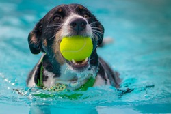 dogs playing with ball and swimming in the pool