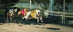 dogs race