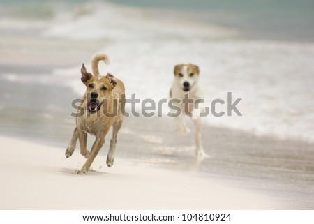dogs running on the beach