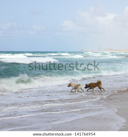 Dogs runs and plays on the sea beach