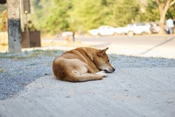 Dogs sleeping on the congrete.