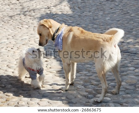 Dogs sniffing each other on a first meeting