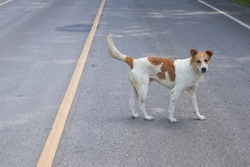 Dogs standing on public roads.Dog standing on the street in the morning.