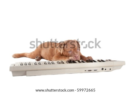 Dogue de Bordeau tired of practicing piano playing