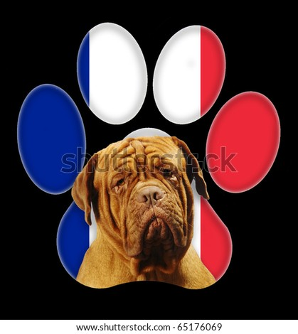 Dogue de Bordeaux dog portrait with a background of French flag in paw print